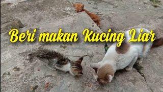 Download Video Kasihan Anak Kucing Liar Kelaparan MP3 3GP MP4