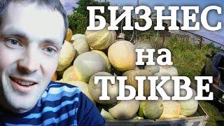 видео Выращивание тыквы как бизнес