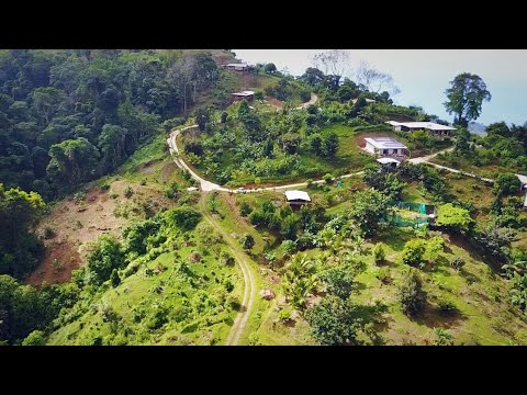 50 Acre Collection of RARE TROPICAL FRUITS!  Food Forest Tour @ Costa Rica's Rawtreat