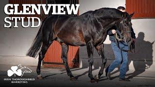 ITM Irish Stallion Showcase 2021 - Glenview Stud