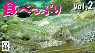 魚たちの食べっぷりVOL.2【素材そのまま】約2時間