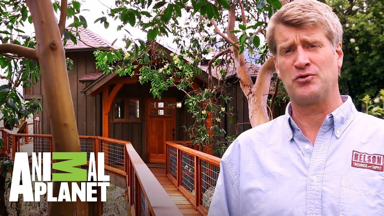 Una Casa De árbol Con Puente En La Colina Mansiones En Los árboles Animal Planet Youtube