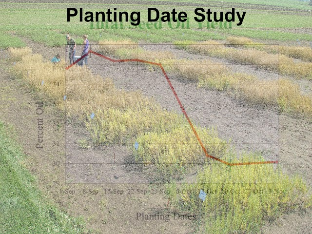 Western Illinois University Pennycress Research History
