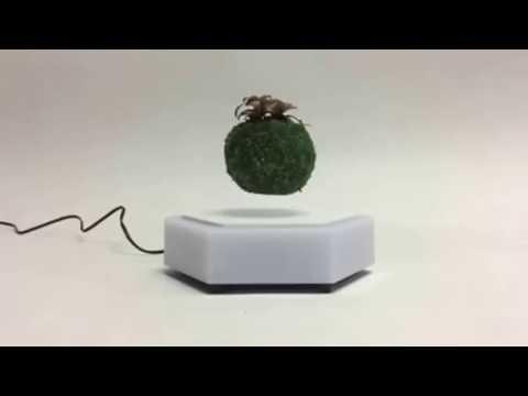 Magnetic Floating bonsai