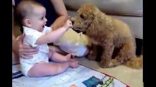 Смешно, не страшно  собаки  с детьми