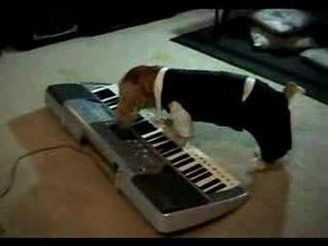 how to play animals on keyboard