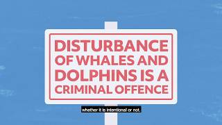 How to recognise and report disturbance of whales and dolphins