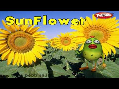 Sunflower Rhyme | 3D Nursery Rhymes With Lyrics For Kids | Flower Rhymes | 3D Rhymes Animation