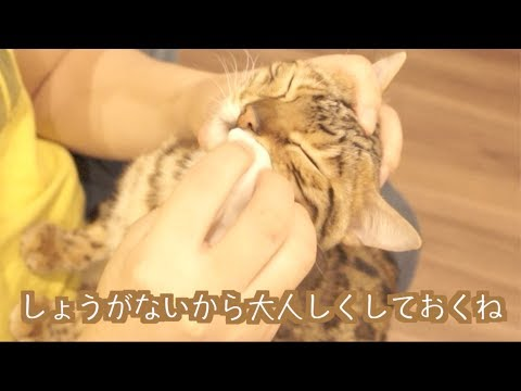 ルトとロゼの顔を拭いてあげると子猫になるよ