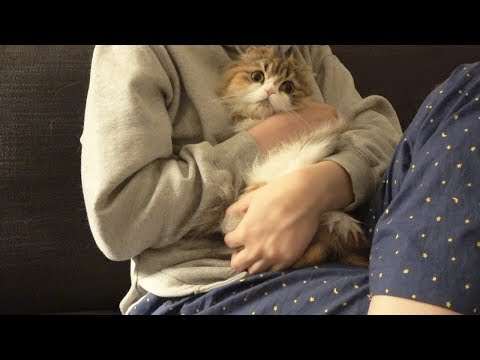 A cat threw herself in my arm while watching a horror film. (ENG SUB)