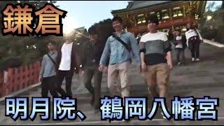 鎌倉をご紹介!Kamakura Roque(鶴岡八幡宮、明月院編)