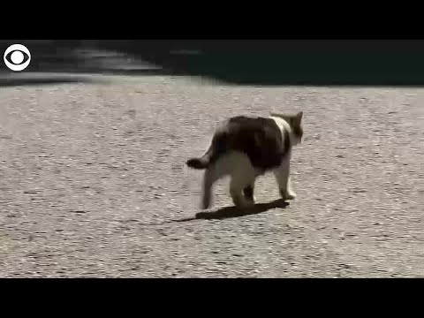 WEB EXTRA: Larry the cat ahead of new PM