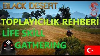Black Desert Toplayıcılık Rehberi - Ekipmanlar ,getirileri ve çeşitleri