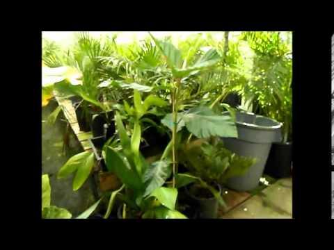 Jungle Music Palms and Cycads