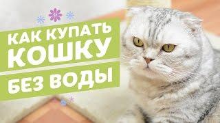 видео Шампунь для кошек