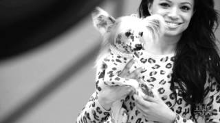 Boerboel & Pink Chinese Crested Dog Photo Shoot