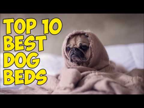 top-10-best-dog-beds-in-2019