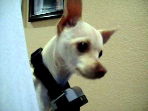 My Dog And Her New Spray Collar Funny Youtube
