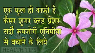एक फूल ही काफी है शुगर ब्लड कैंसर ,हाई ब्लड प्रेशर ,कमज़ोरी ,एनीमिया से बचाने के लिए