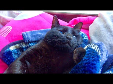 最近黒猫の様子が変なので病院へ行ってみたら。。