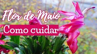 Flor de Maio gosta de sol ou sombra? Como cuidar da Flor de Maio