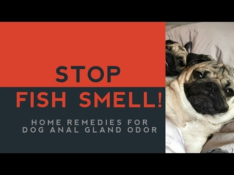 Home Remedies For Dog Anal Gland Smell
