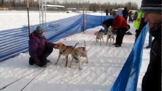 8-dog Sled Sprint Race, 12 Miles, North Pole, Alaska