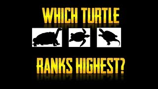 The Turtle Tier List