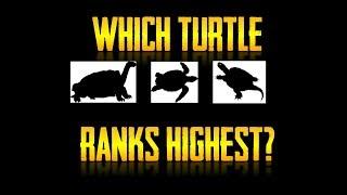 The Turtle Tier List