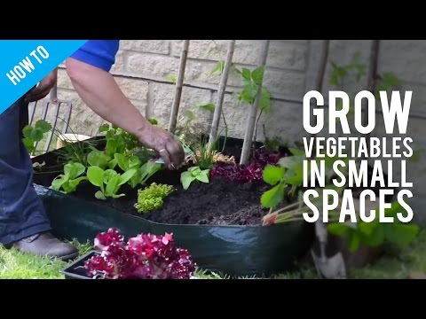 How to Grow Garden Vegetables In Small Spaces