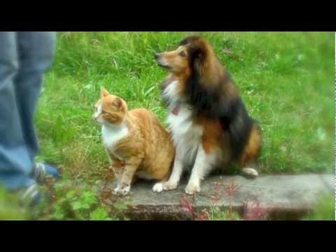 Joy & Lucky --Dog and Cat Tricks