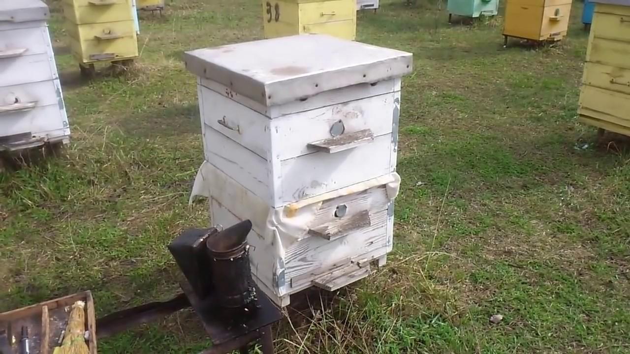 Спасение осиротевшей пчелосемьи весной