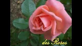 La Valse des Roses