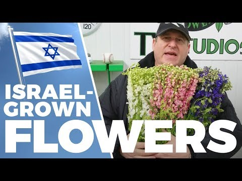 JFTV: Israel-Grown Flowers Product Spotlight With Mike