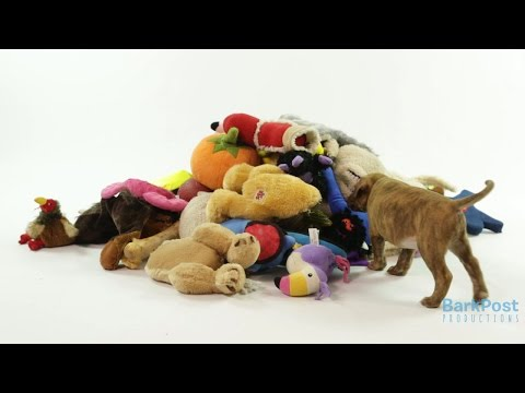 Puppies vs Toy Mountain