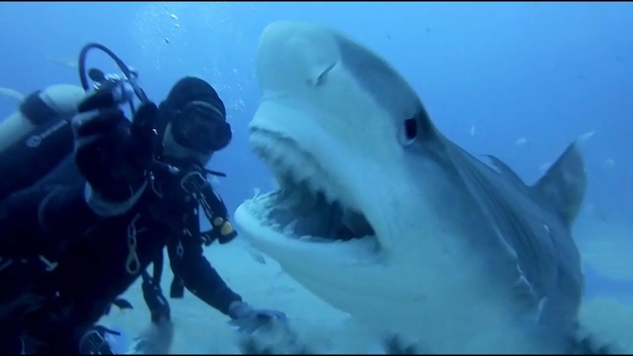 Scary pictures of sharks