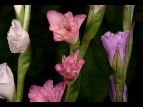 П.и. чайковский вальс цветов скачать