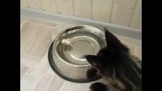"""Алекс. Спасение """"утопающего"""" # Как развлечь кошку # Игры для котенка"""