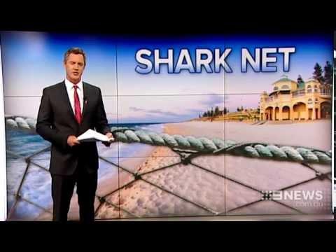 Shark Net | 9 News Perth