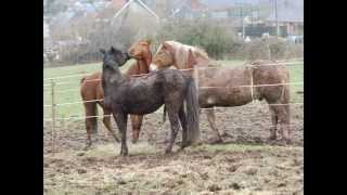 site de rencontre chevaux couple flirter