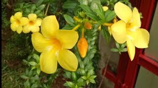 SiCor little farm_#flower_01