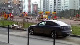 видео камеры ласточка