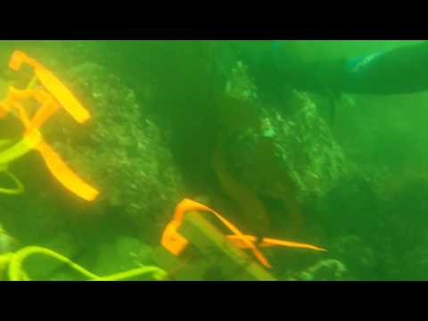 Diving Point Caution - Mapping a Kelp Site
