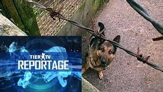Reportage: Hundequäler