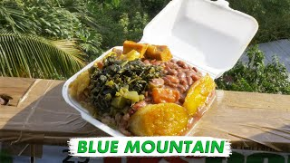 🇯🇲 Rasta Blue Mountains in Jamaica   Vlog