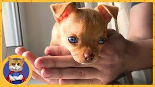 Нашли щенку Нюше новых хозяев! Рыжик счастлив!