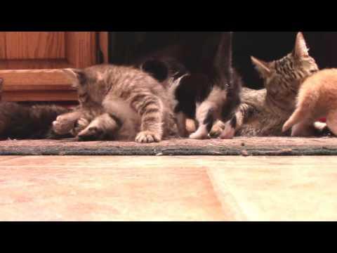 Kittens that Squeak - Cally's little ones