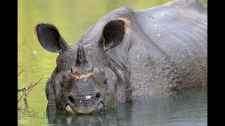 Who shares rhino habitat?