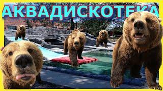 АКВАДИСКОТЕКА Дворец медведя Мансура