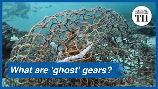 Impact of 'ghost' fishing gears on ocean wildlife